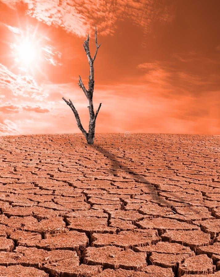 Droge woestenij zonder water Dode boomstomp Zonstralen op rode hemel royalty-vrije stock foto's