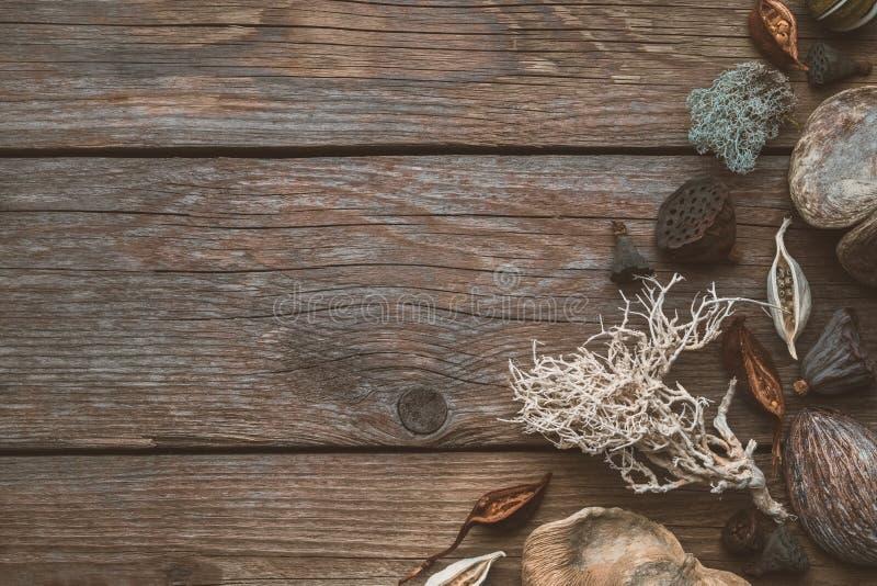 Droge wortels, nootshell, kokosnoten, droge installaties, lotusbloemzaden voor floristisch ontwerp op houten raad stock afbeelding