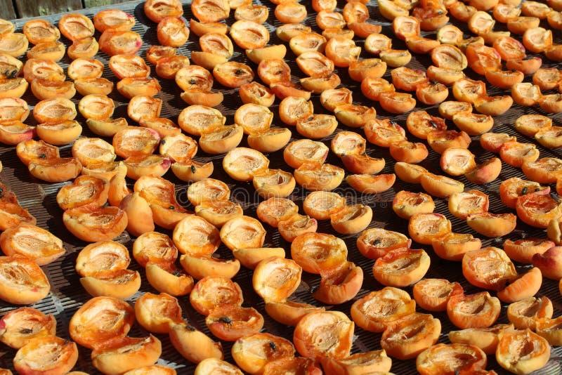 Drogende abrikozen stock foto
