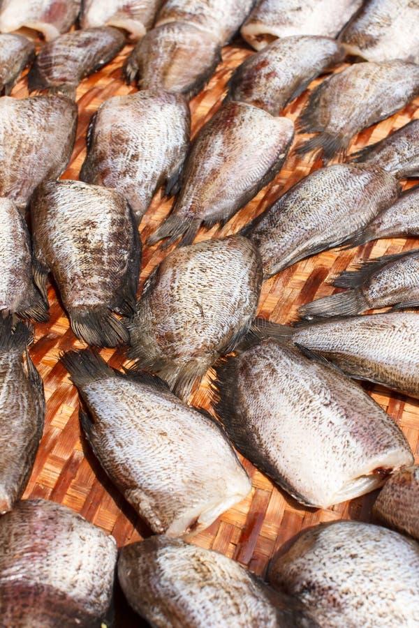 Drogende snakeskin gourami vissen stock afbeelding