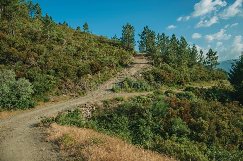 Drogi gruntowe na górkowatym terenie zakrywającym krzakami i drzewami zdjęcia royalty free