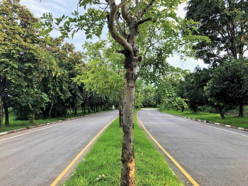 Drogi i drzewa zdjęcia stock
