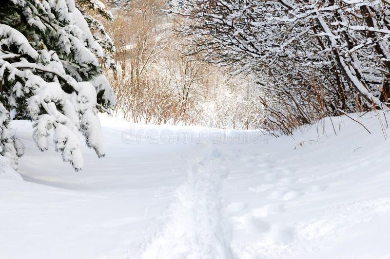 drogi leśną zimy. fotografia stock