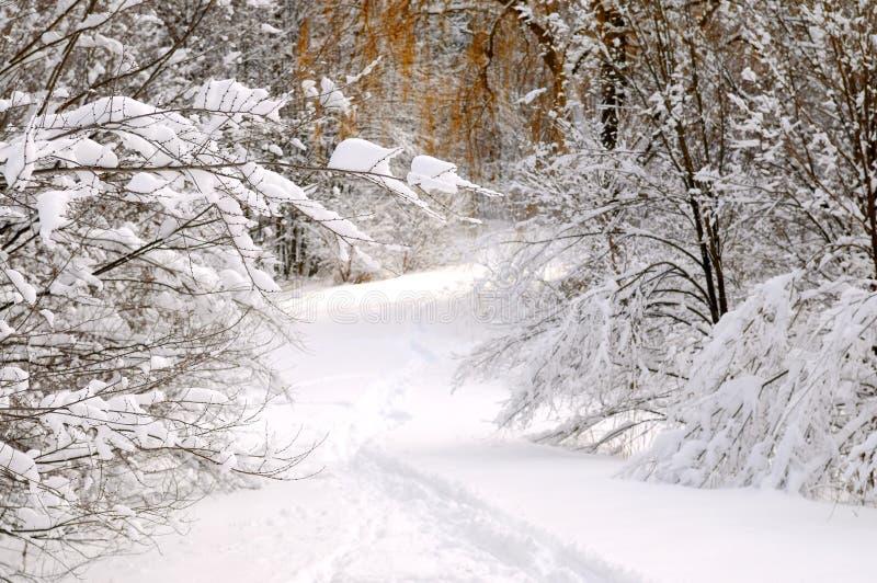 drogi leśną zimy. obrazy royalty free