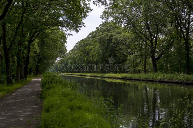 Drogi wodne w Belgia, manmade kanał z dębowych drzew aleją zdjęcia stock