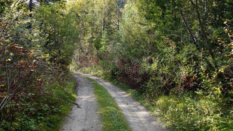 Drogowa lasowa natury przepustka Slyudyanka Khamar-Daban obraz royalty free