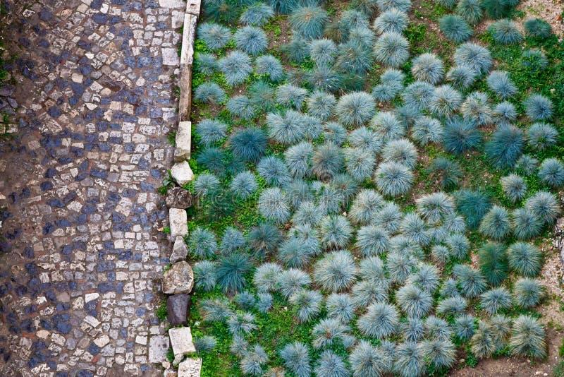 drogowe brukować zielone rośliny zdjęcia royalty free