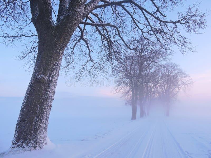 Drogowi i starzy drzewa w wschodu słońca nieba kolorach, Lithuania obrazy stock