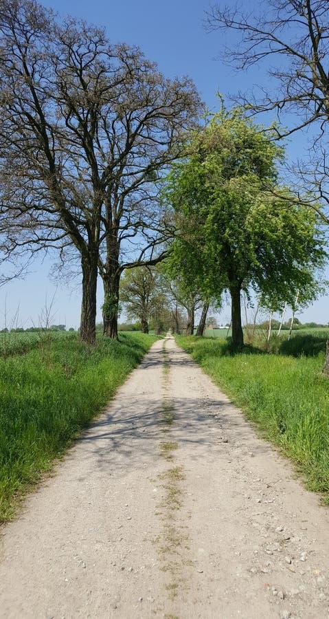 Drogowy acros zieleni pole zdjęcie royalty free