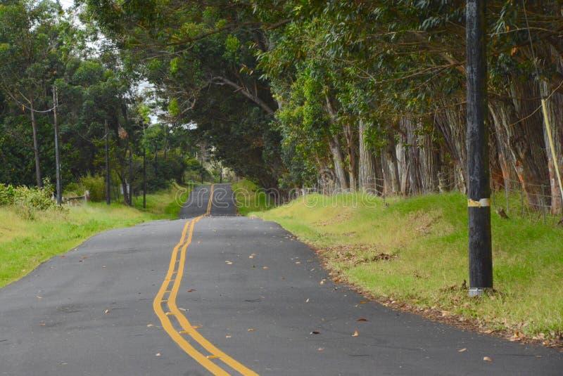 drogowy na drzewo zdjęcia royalty free
