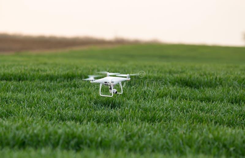 Drohnenfliegen über Feld der grünen Ernte lizenzfreies stockbild
