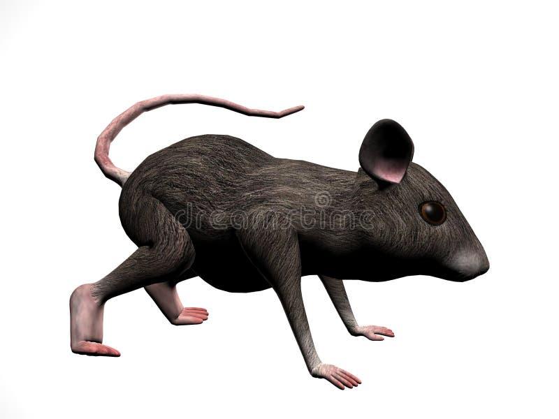 Droite de souris illustration de vecteur
