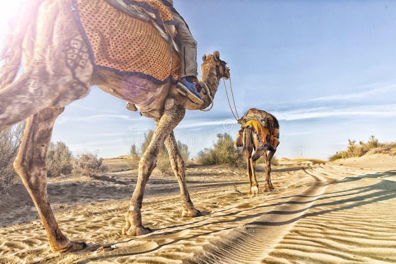 Dromedar mit Touristen in der Thar-Wüste lizenzfreie stockfotografie