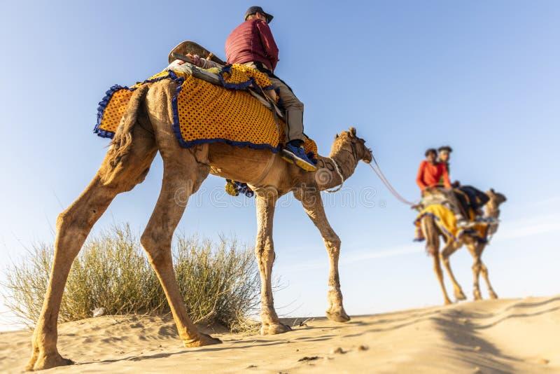Dromedario con il turista nel deserto di Thar fotografie stock
