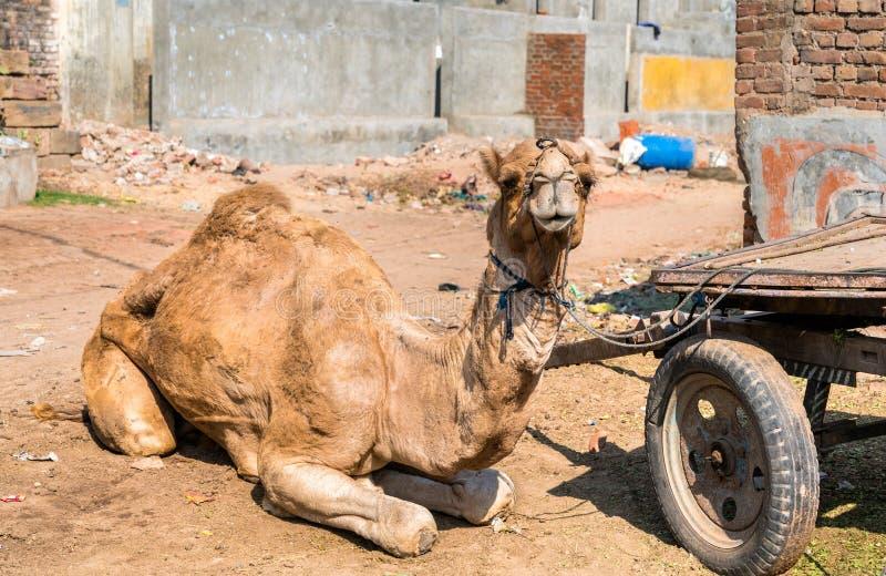 Dromedaris met een kar die op het werk wachten Patan, India royalty-vrije stock afbeeldingen