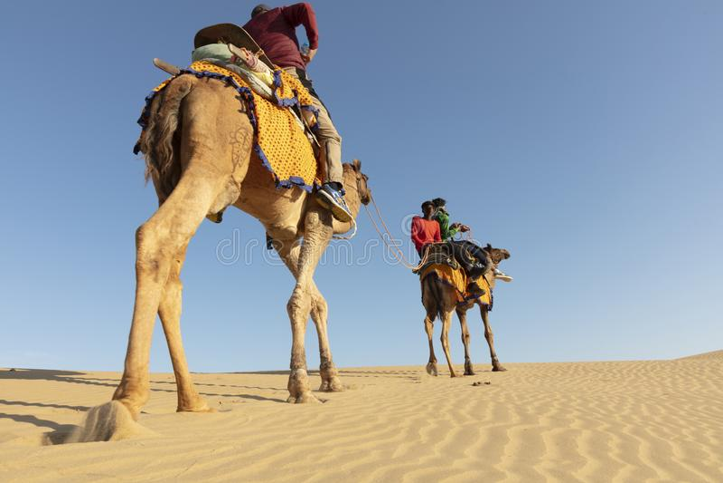 Dromedaris met toerist in de woestijn van Thar stock fotografie