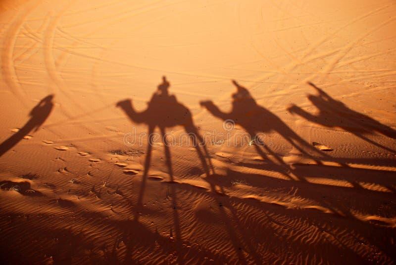 Dromedarissenschaduwen. Erg Chebbi, de Sahara, Marokko royalty-vrije stock fotografie