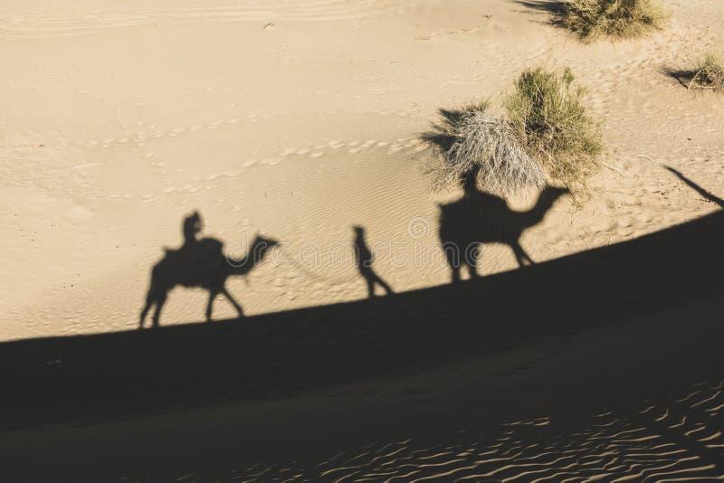 Dromedarschatten in der Wüste von Thar stockbild