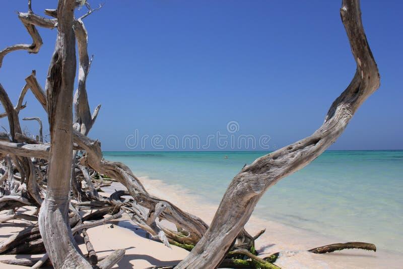 Dromend Cuba stock foto's