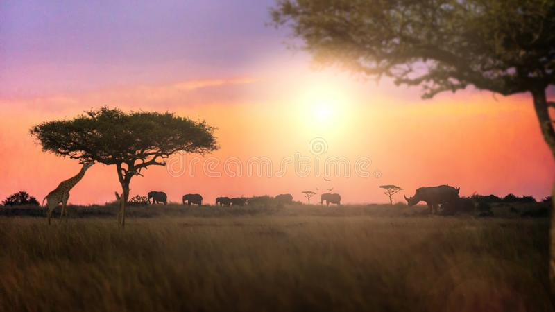 Dromerige Afrikaanse Zonsondergang Safari Silhouette Scene stock foto