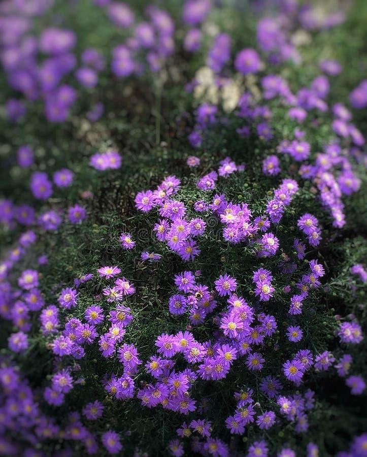 Dromerige bloemen royalty-vrije stock afbeeldingen