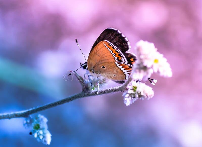 Dromerige vlinderzitting op bloem roze blauwe achtergrond royalty-vrije stock afbeeldingen