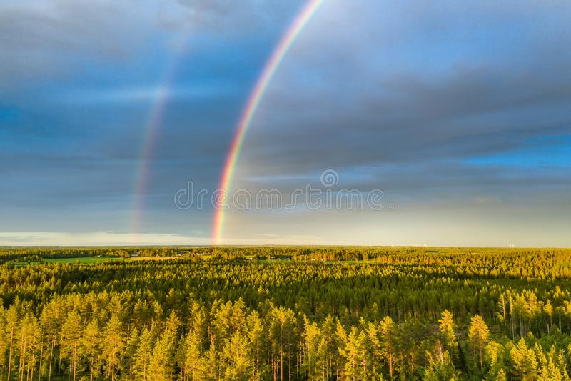 Drone photo, rainbow over summer pine tree forest, very clear skies and clean rainbow colors. Scandinavian nature are illuminated. By evening sun, outside of stock photography