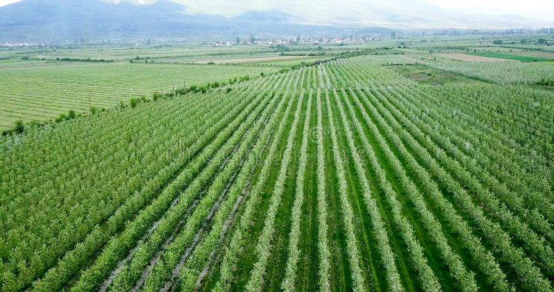 Drone photography,aerial view of orchards in resen, prespa, macedonia. Image stock photo