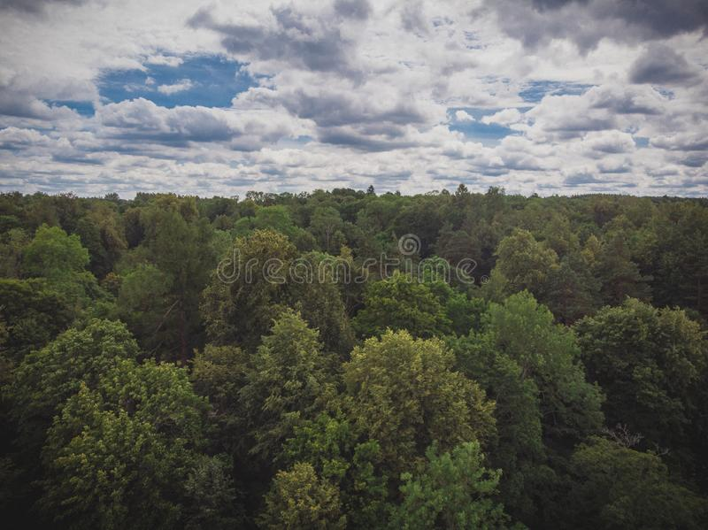 Drone photography of forest canopy. And cloudy sky during summer day stock images