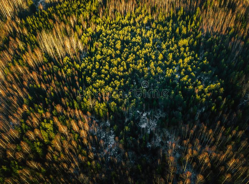 Download Drone Photography Of A Sunny Winter Day Partly Snowy Forest Stock Photo