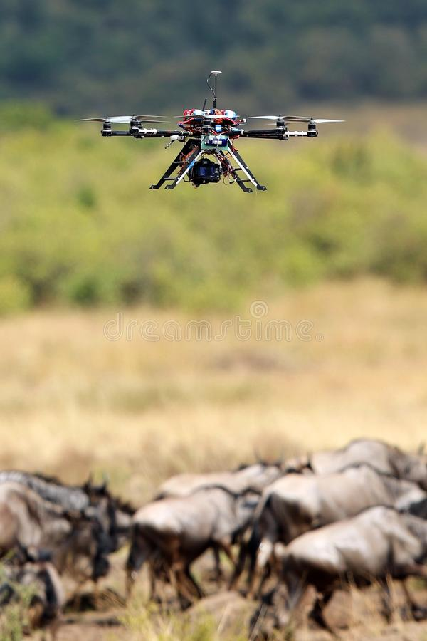 Drone recording Great migration in Masai Mara royalty free stock images