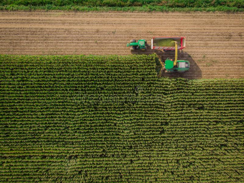 Drone shot of a of working people during the summer time. royalty free stock photography