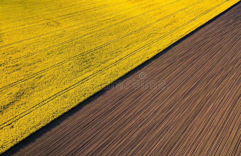 Drone view above yellow colza rape fields, agriculture concept from drone perspective royalty free stock image