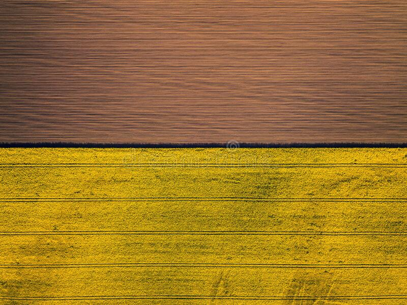 Drone view above yellow colza rape fields, agriculture concept from drone perspective stock photos