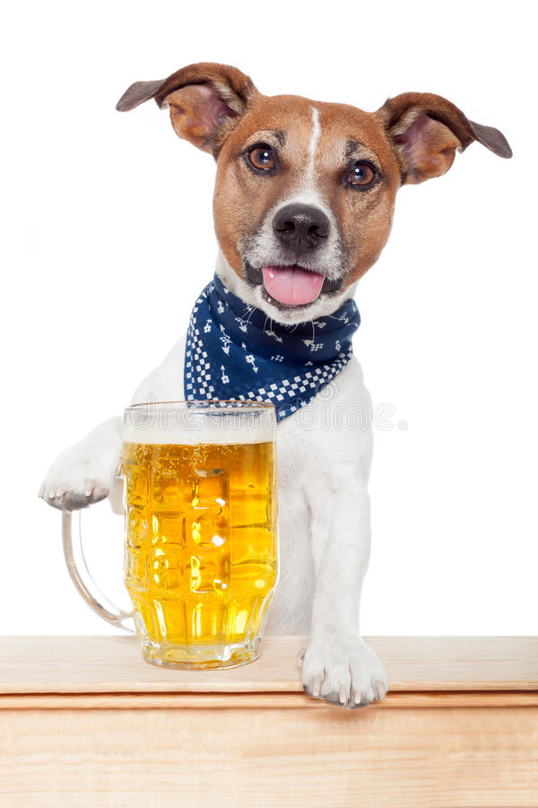 Dronken hond met bier