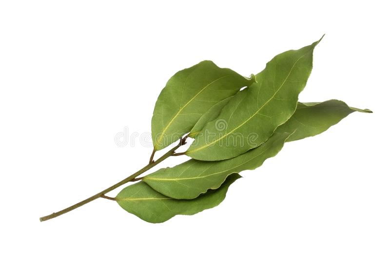 Droog aromatisch die laurierbladtakje op een witte achtergrond wordt geïsoleerd Foto van de oogst van de laurierbaai voor de zake stock afbeelding