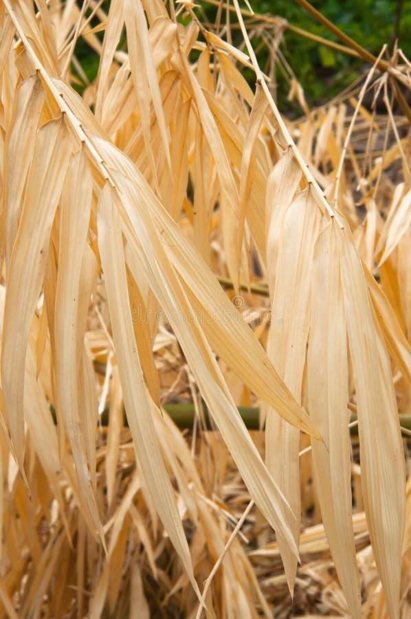 Droog bamboeblad stock afbeelding
