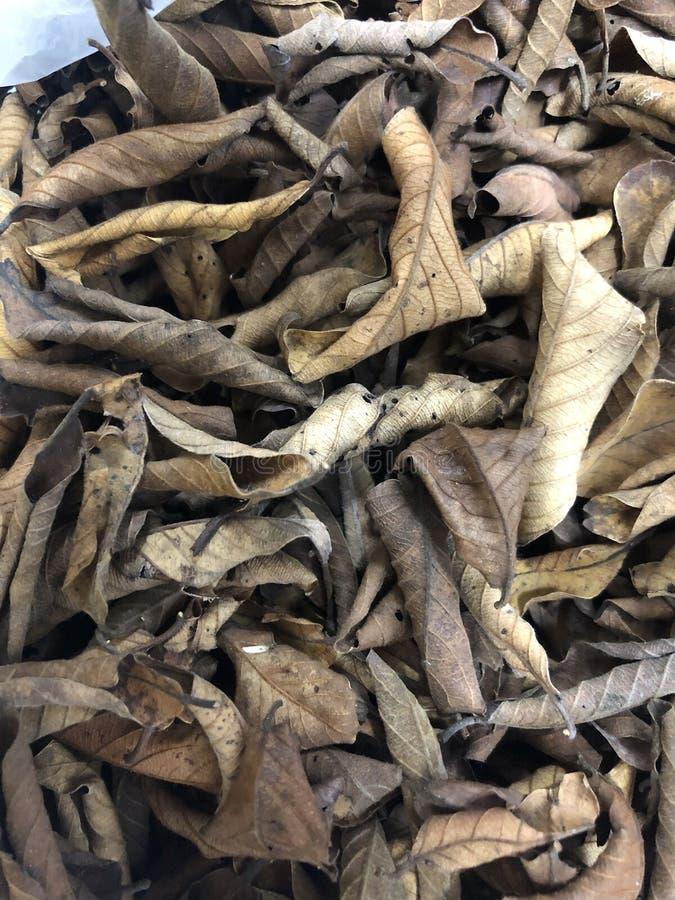 Droog blad en bladdaling stock afbeelding