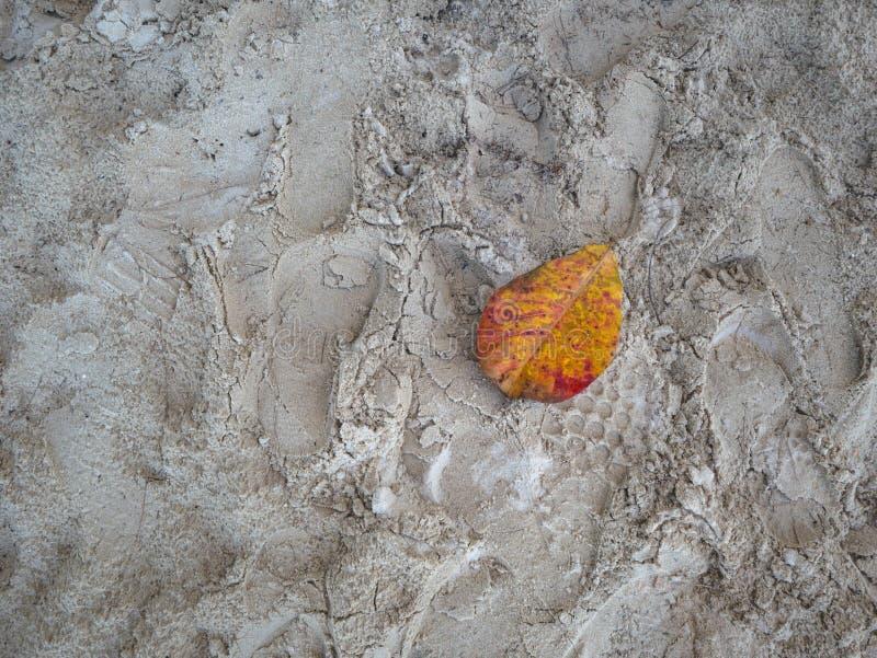Droog blad op het strand stock foto