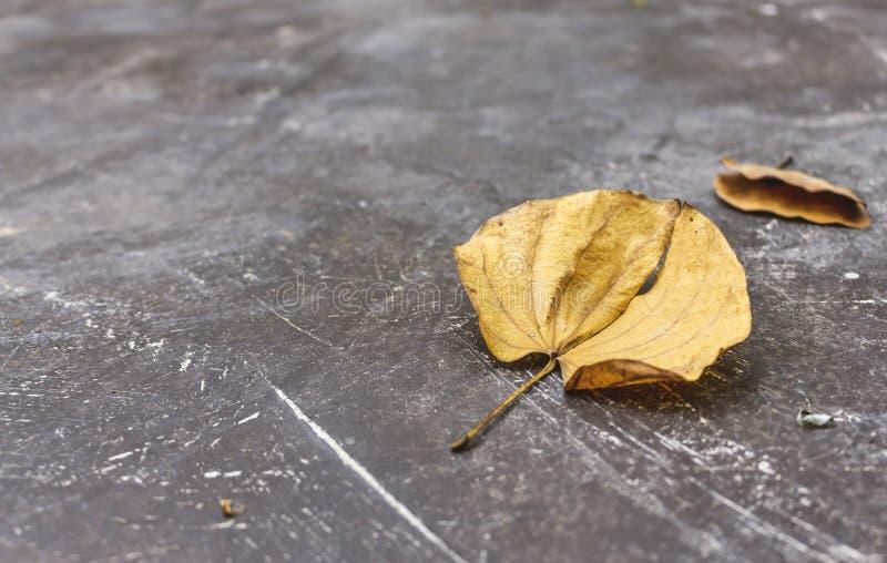 Droog blad op oude cementvloer stock afbeelding
