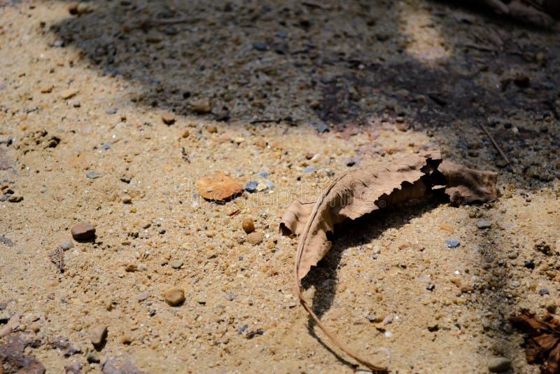 Droog blad op zand stock foto
