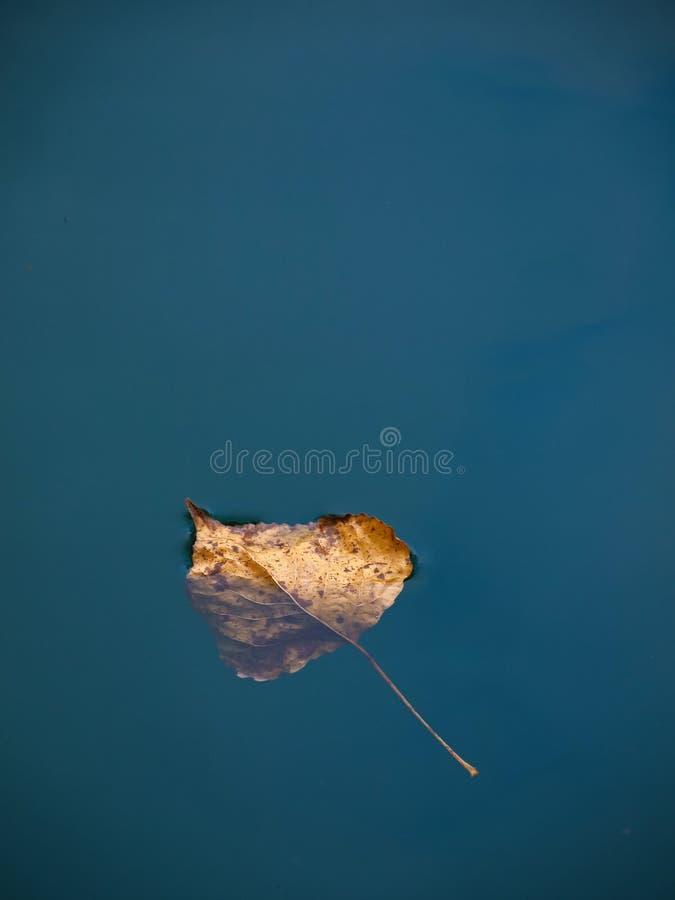 Droog blad in water royalty-vrije stock afbeelding