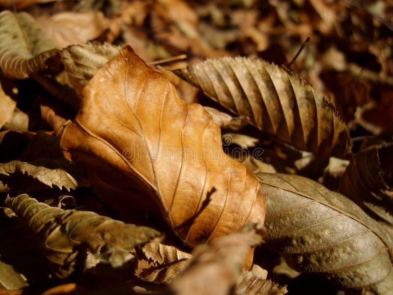 Droog bladeren in aard royalty-vrije stock afbeelding