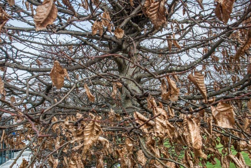 Droog bladeren in de bomen royalty-vrije stock afbeeldingen