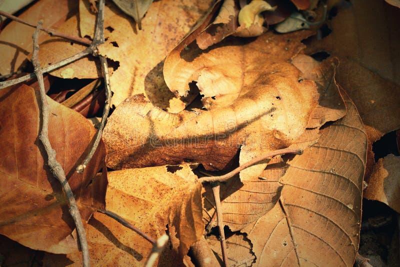 Droog bladeren en schaduw stock foto's