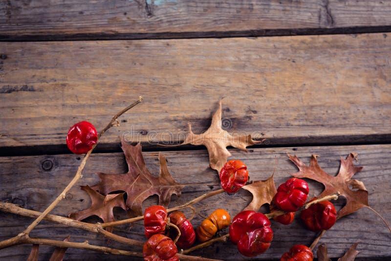 Droog bladeren, takken en maretak op houten plank stock fotografie