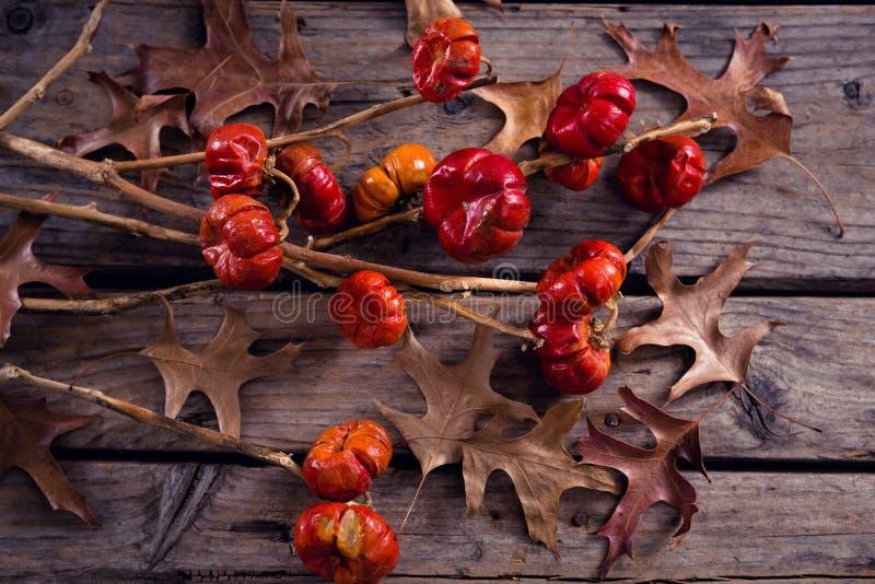 Droog bladeren, takken en maretak op houten plank stock foto