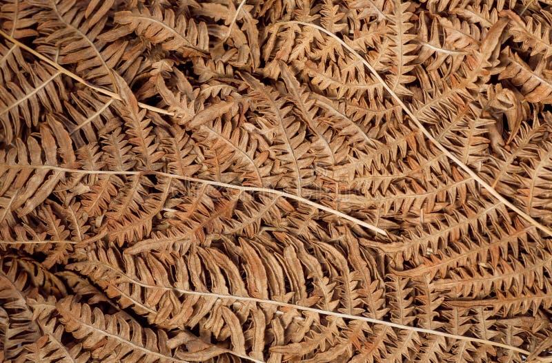 Droog bladerenachtergrond Textuur van de herfstblad van varen bosinstallatie stock afbeelding