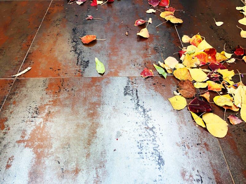 Droog bladerentextuur: de schoonheid van de herfstbladeren Boomblad op een roestig metaalblad stock foto's