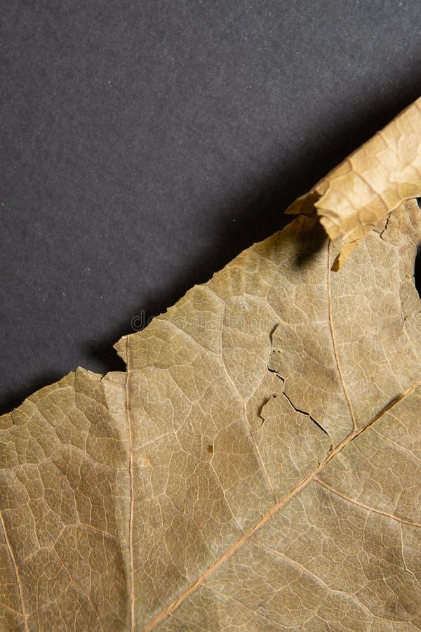 Droog bruin blad op zwarte achtergrond Close-up, macro van een de herfstblad stock afbeeldingen